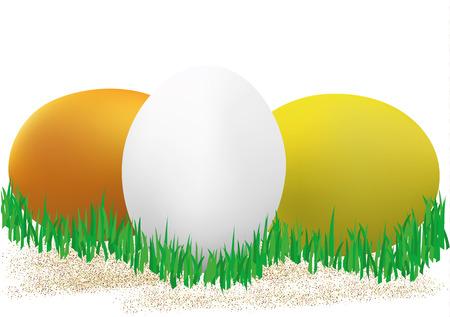 Colored chicken eggs.