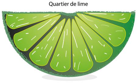 appointed: Lemon lime slice green Illustration