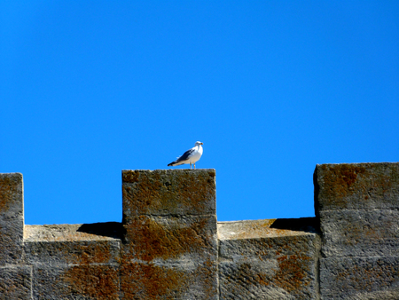 Seagull on a rampart