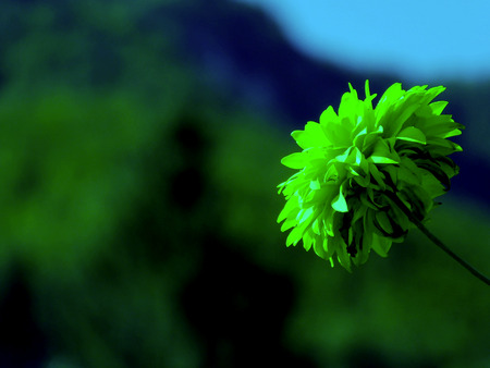 Flower with mountain background Stock Photo