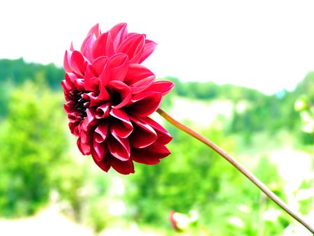 Fleur à longue tige
