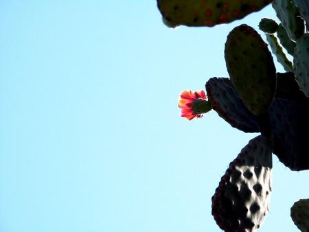 Cactus with a flower Banco de Imagens