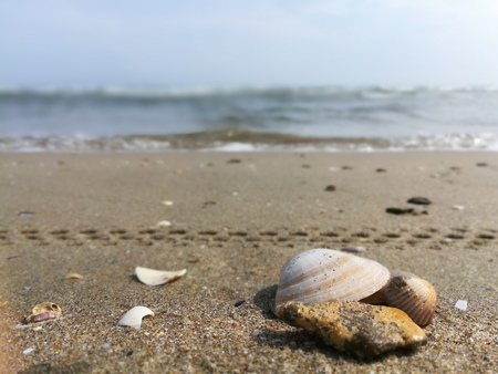Close-up of seashells by the beach Stock Photo