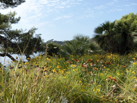 Landscape of flowers by the sea Stockfoto