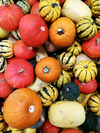 Pile of pumpkins of different shapes and colors