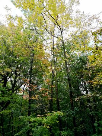 Multicolored forest in autumn Stockfoto