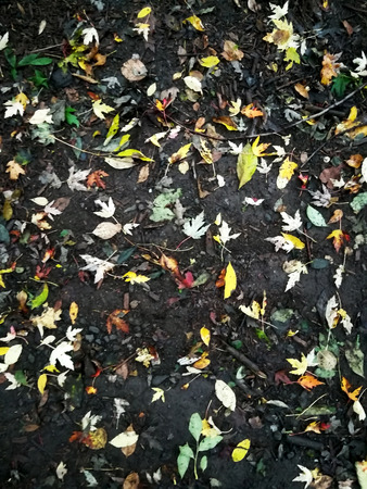 Multicolored leaves in autumn