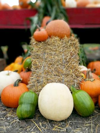 Various colorful pumpkins Stockfoto