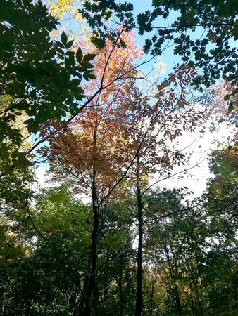 Nature in autumn Stockfoto