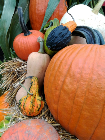 Various colorful pumpkins in close up