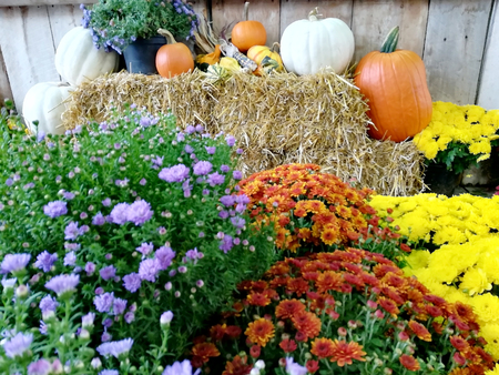 Pumpkins on straw boots with flowers