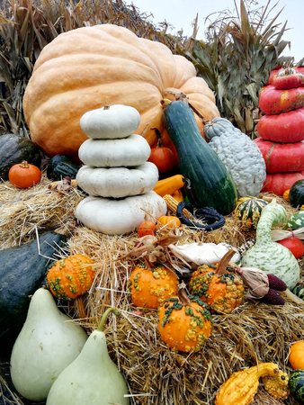 Pumpkins on straw bales Stockfoto