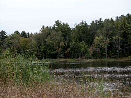 Natural landscape at the edge of a lake Stockfoto