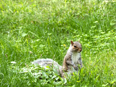 A squirrel in the middle of nature
