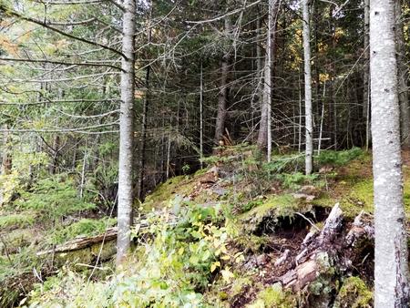 Mountain landscape in autumn Stockfoto