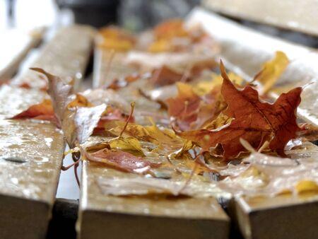 Bench in autumn in the rain