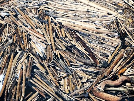 Accumulation of wood on the water Stockfoto
