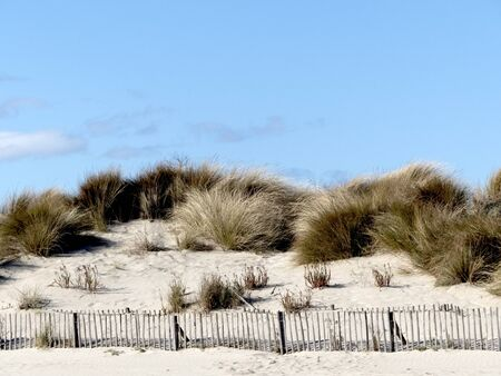 Dunes with barriers on the beach Stockfoto