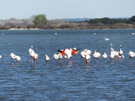Flamingos in the wild and natural Camargue Stockfoto - 131846042