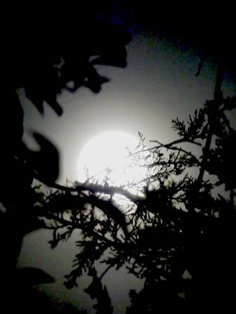 moon hidden by a tree foliage Imagens