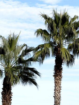 Large palm trees With large leaves Stockfoto