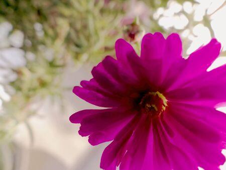 purple flower close-up Reklamní fotografie