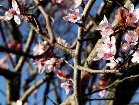 flowering trees in Spring Reklamní fotografie - 142197518