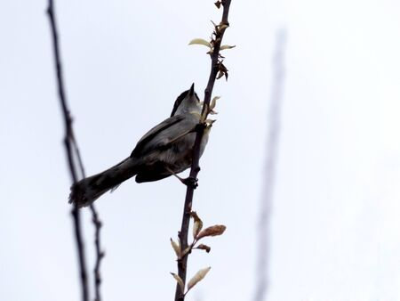 A bird perched on a branch