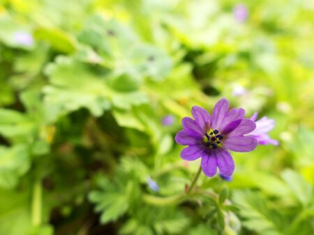 Flowers of purple color on green background