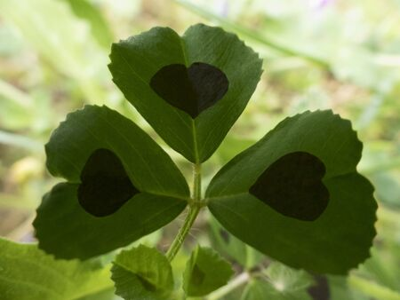 Green flower with a heart shape Stockfoto