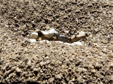 Close-up of an ant nest