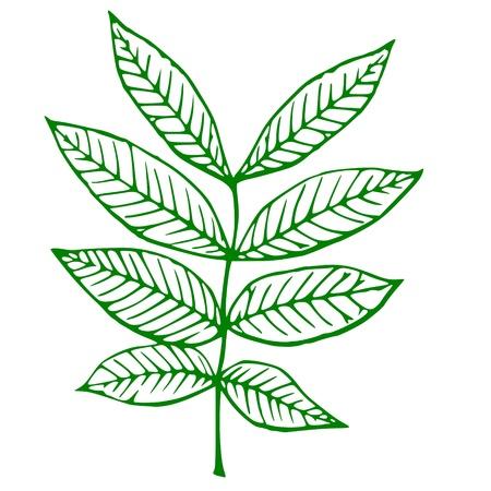 Umrisse einer grünen Pflanze Standard-Bild - 18963094