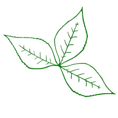 venation: outline of a green plant Illustration