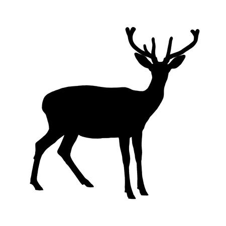 cervidae: a deer resting