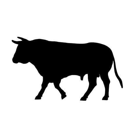corrida: walking a black bull