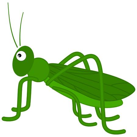 locust: a green grasshopper