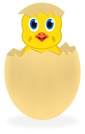 palmiped: a chick out of the egg