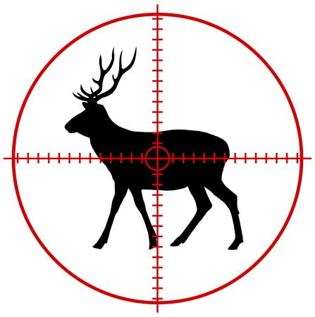 cervidae: a deer in a target