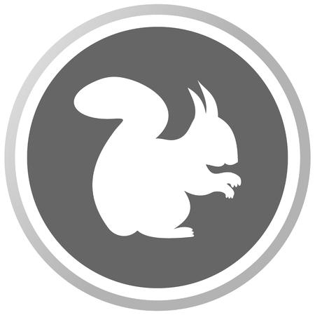 a squirrel in a grey Panel Vector