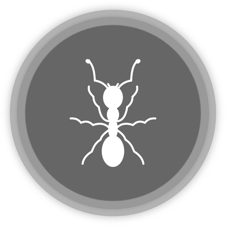 feeler: an ant in a grey Panel Illustration