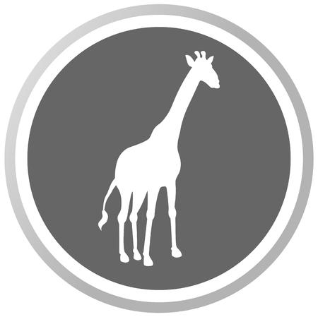 giraffa: una jirafa en un panel gris Vectores