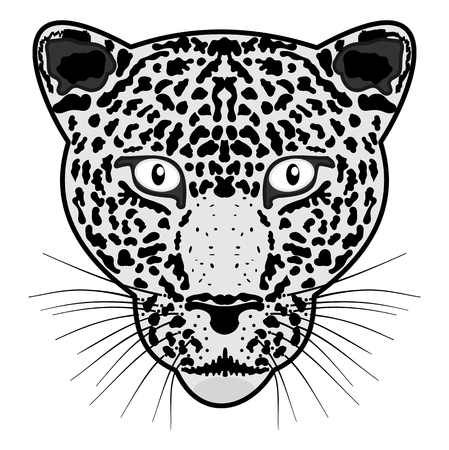felidae: head leopard