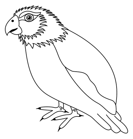 parakeet: a parakeet for coloring Illustration