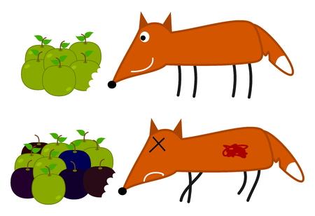 intoxication: fox will eat rotten apple