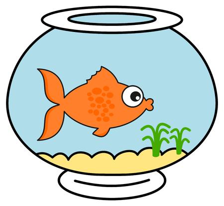 an orange fish in his aquarium