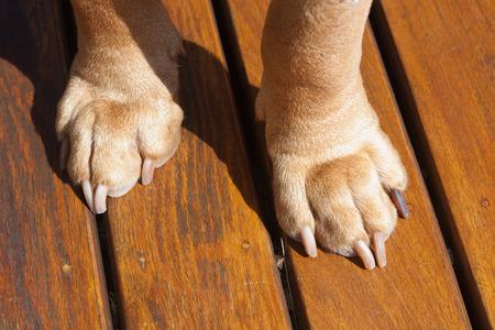pelage: Dog paws