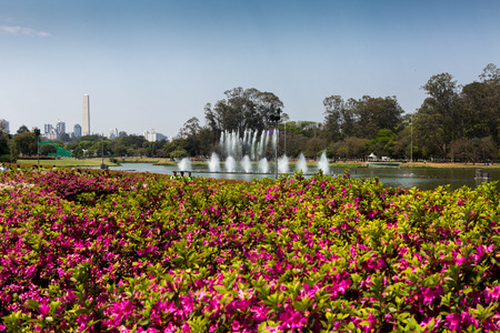 Sao Paulo, Brazil.18 September 2016. Ibirapuera Park in Sao Paulo, with the first flowers of early spring. In the background, the Obelisk of Sao Paulo.