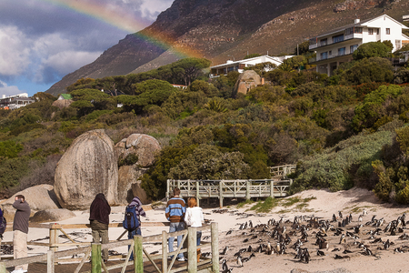 penguins on beach: Boulders Beach is a popular tourist stop because of a colony of African penguins Stock Photo
