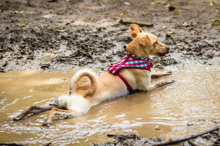 A mutt resting in a puddle of mud.