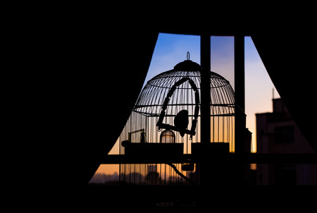 Silhouette of bird trapped in a cage watching the sunset,